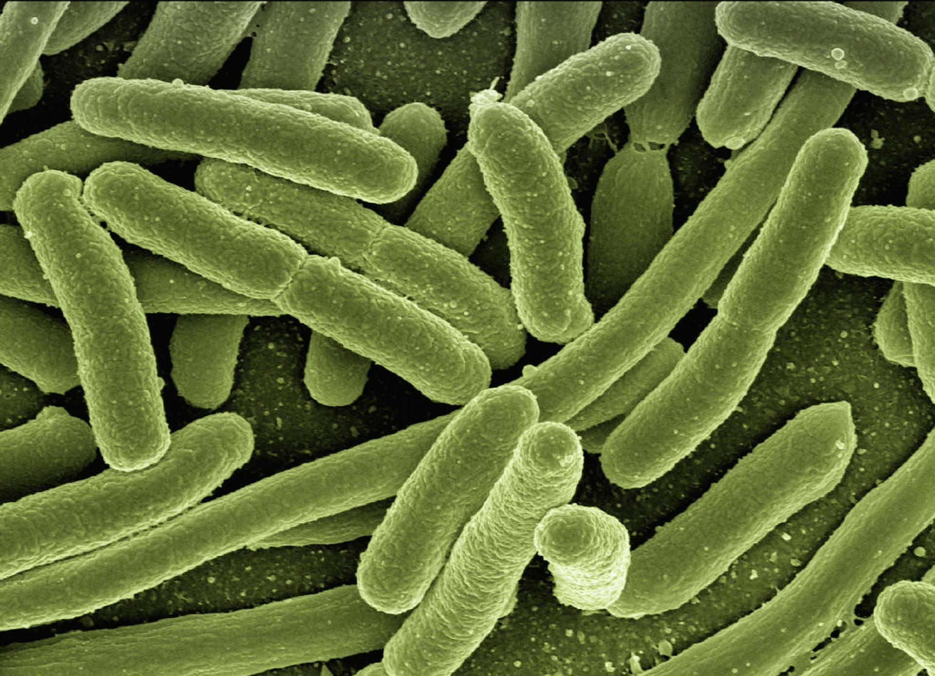 FDarmbakterien - Darmsanierung