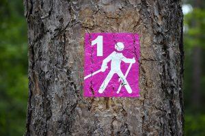 Gesunder Sport: Nordic Walking
